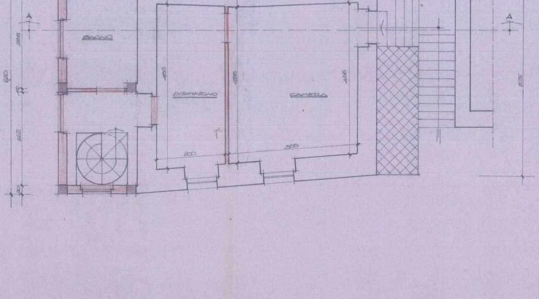 Copy of pianta1_0006